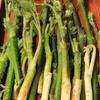 肴の山菜料理 『標高1500メータ付近の山菜』