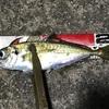 第一投目から良型&爆釣(ポイントA-6)