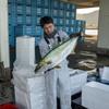 2020年11月5日 小浜漁港 お魚情報