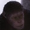 映画『猿の惑星シリーズ』全作品の動画やストーリーを紹介!