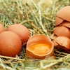 【卵の保存方法】常温?冷蔵庫?安全のために覚えておきたい保存方法!