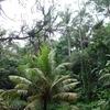サバイバル・ジャングル(14)