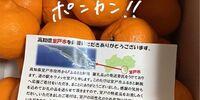【ふるさと納税】高知県室戸市からポンカンが届きました #楽天ポイントでふるさと納税