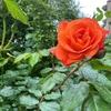 せせらぎの小道:花の質感