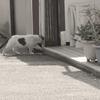 2月26日 台東区橋場から荒川遊園まで猫さま歩き とその情景