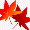中央地区周辺の紅葉!