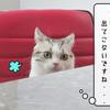 猫雑記 ~二匹の帰省①~