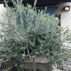 カシューナッツと黒胡椒 パーラー江古田(東京都練馬区)