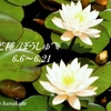 芒種/ぼうしゅ/二十四節気/梅雨の晴れ間の花々をそっとお届け致します💐