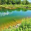 大沼湖(長野県駒ヶ根)