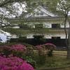 館山城山公園は躑躅(つつじ)がこれから見頃を迎えます(^^♪