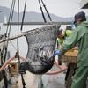 2017年 小浜漁港 お魚情報