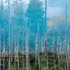 北海道の「青い池」を逆さ撮影