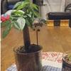観葉植物とお部屋のレイアウト