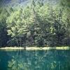 鴨がぶち壊す緑の絶景 ~御射鹿池~