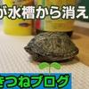【傾向を把握】亀が脱走した場合、どこにいるか素早く捜索する順序があります!