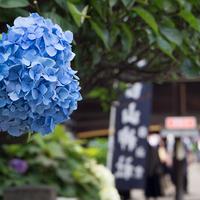 文京あじさいまつり「白山神社」(2017.06.14)