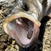【家島】根魚パラダイスの離島に泊りがけで釣りしてみた Day1