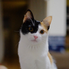 【163日目】猫様を生き生きと見せる撮り方