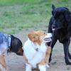 コーギーの飼い主は外向性が高い?? 犬種によって飼い主の性格の傾向があるらしい。