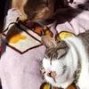 猫は友達以上