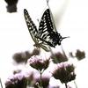 小説2本を読んだ誰かから「良かった」と言ってもらう - 「夢見る蝶」