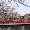 飛騨高山へ - vol.5 - 2015春 宮川と桜