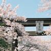 河口湖の桜とやっと撮り終えたフィルム(KODAK PORTRA 160)