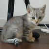 愛を求めて旅立った猫 ~猫を拾うということ(その3)~