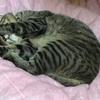安心なペットホテルと猫の予防接種で旅行に行く方法