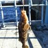 【釣行編】2018年初釣行での、初フィッシュはアイナメ!