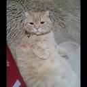 猫たちと株主優待気ままブログ