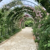 あしかがフラワーパーク|6月上旬は薔薇(バラ)が見頃:栃木県足利市