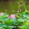 白虎池(福島県会津若松)