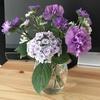 【花を飾る】#8 白薄紫の「紫陽花」
