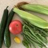 夏野菜の収穫~やっぱり、採れたてはおいしい!~