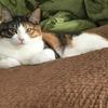 愛猫の可愛さに全ての疲れが癒される…