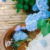 明月院の紫陽花 Vol.3 2020