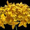 今日のマヤ暦「面倒なことにも向き合いましょう」。KIN128 黄色い星・白い鏡・音11
