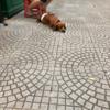 ベトナムで出会った犬いぬ