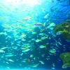 素潜り(魚突き)に必要なあると便利な物10選