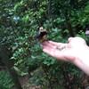 小鳥さんが手にのってエサを食べてくれました!!