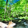 十和田湖と奥入瀬渓流