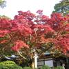 【鎌倉いいね】15年前に撮った鎌倉を発見。その天園ハイキングコースは台風被害で通行禁止中。