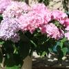「母の月」にサプライズの花を贈ります
