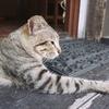 沖縄で出会った、かわいすぎる猫さん4匹の話