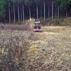 古民家の草刈り