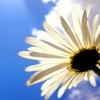悟りに逃げて自分の可能性の芽を摘むな!どんな人も自分の力でしか咲けないんだよ!