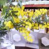 ミモザ と銀葉アカシア Acacia baileyana