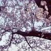 ココカラお花見2017